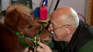 WEIDMAN, MICH.- Dr. Pol goes nose to nose with a mini-horse named Charlie. Charlie works as a service animal, visting nursing homes and military veterans. (Photo Credit: National Geographic Channels)