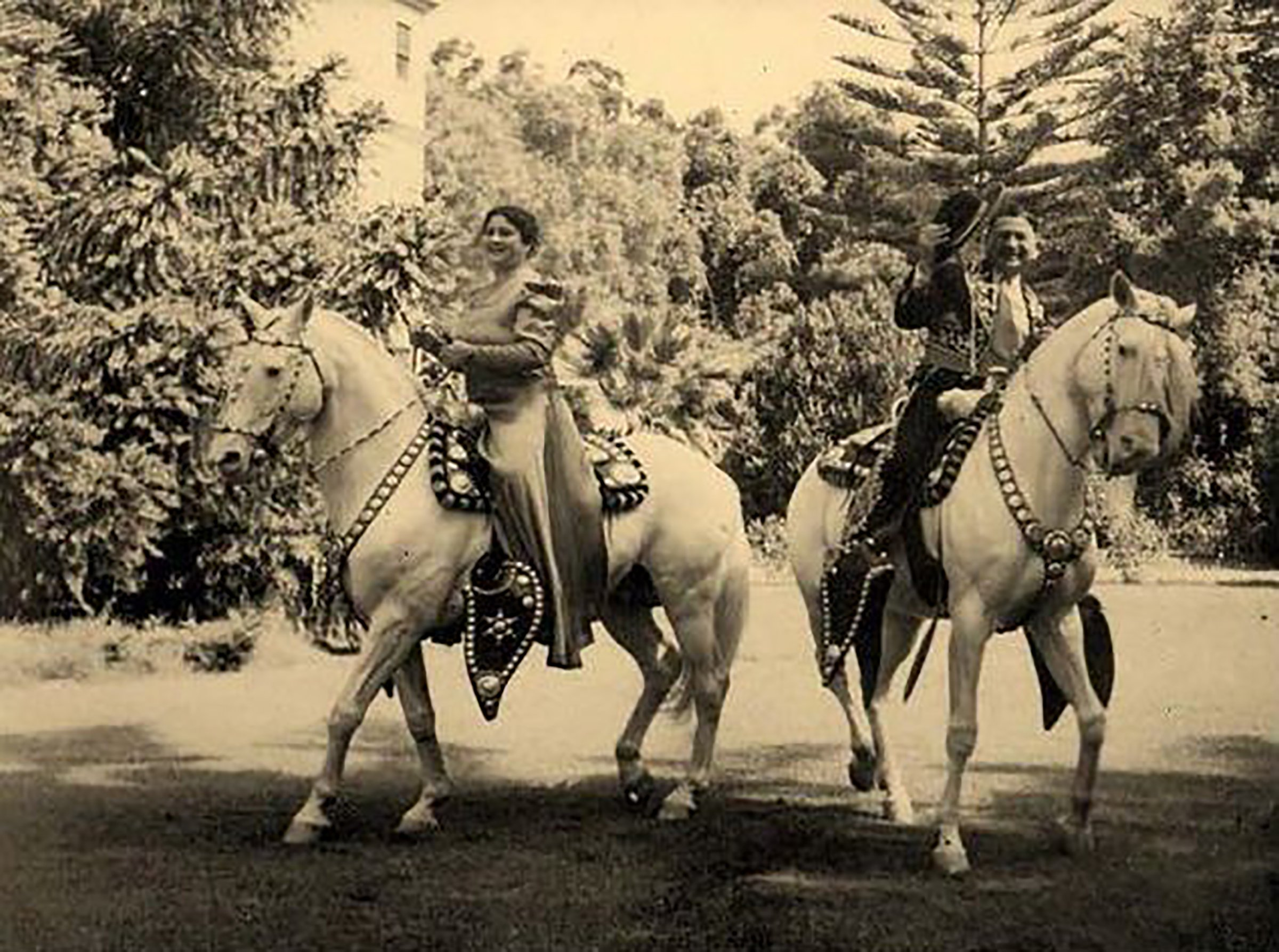 Were Camarillo White Horses In Camarillos 2020 Christmas Parade The legacy of the rare and proud Camarillo White horse breed | AGDAILY