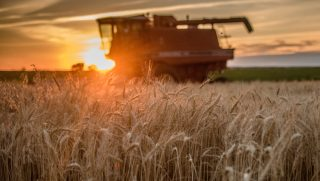National Wheat Yield Contest