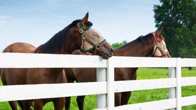 best fly masks