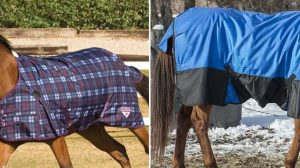 best horse sheets