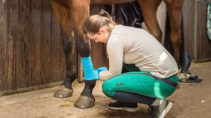 equine first aid