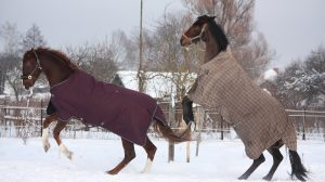best horse blankets