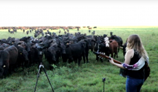 'America's Got Cows': Perhaps the best reality show ever!