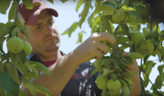 An Indiana apple farmer's journey and how the Gator XUV835 helps