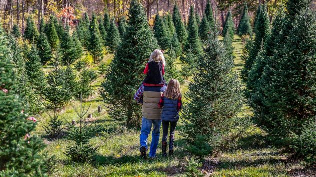 christmas tree farm family