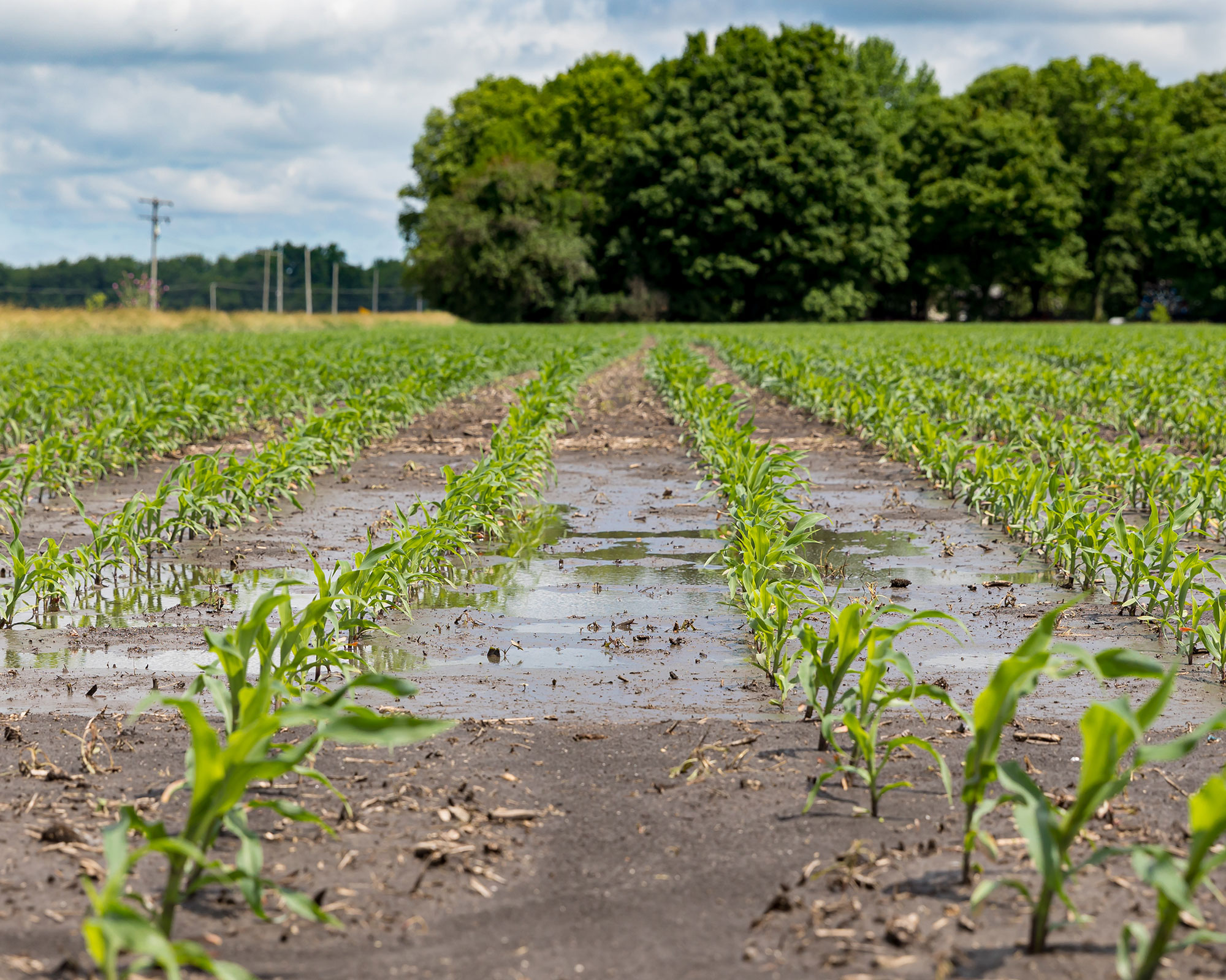 tile drainage system and healthy soil