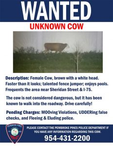 unknown cow