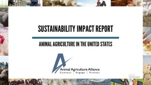 sustainability impact report