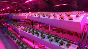 what is aeroponics