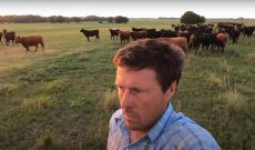 Farmer Derek calls in his cattle for a selfie