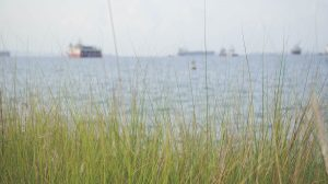 chesapeake_bay_grass