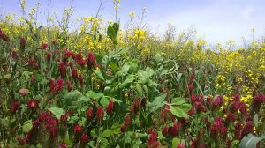 penn state cover crops
