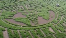 New England's largest corn maze reopens for 2020