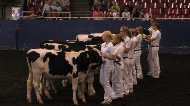 dairy_cow_judging