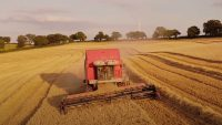 english_barley_harvest