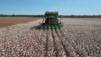 cotton farmers