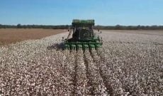 Louisiana farmer explains processes & passion behind cotton