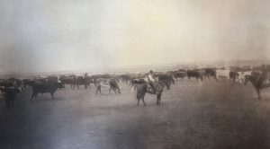 historic-cattle-drive