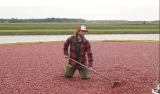 YouTuber tries his hand as a first-time cranberry farmer
