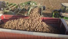 Drone footage of Idaho's 2020 potato harvest
