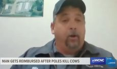 When an electric pole killed 3 cows, producer reached out for help