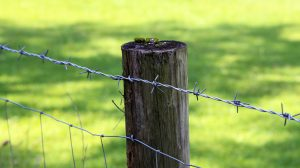 best-cattle-fence