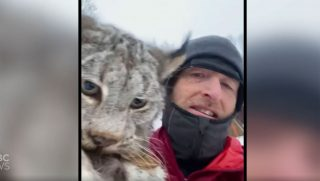 canadian-farmer-lynx