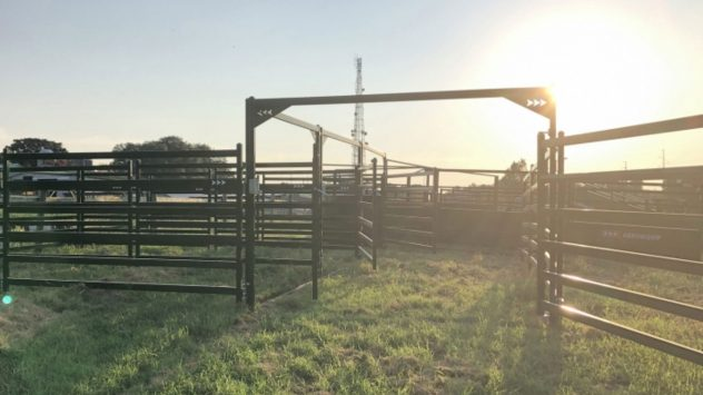 arrowquip-cattle-handling-flow
