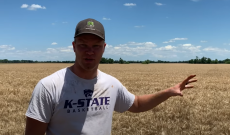 Peterson brother sets record straight on glyphosate and wheat