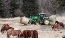 USFS_04_Tractor-feeding-Suzanne-Downing
