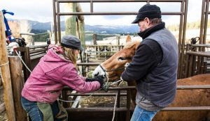 USFS_07_Horses-and-mules-vaccinated-Suzanne-Downing