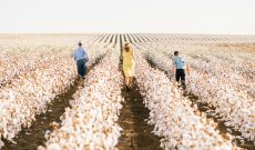 Texas cotton grower wins BASF's artwork competition