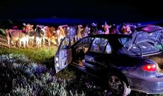 Dairy cows help put an end to a Wisconsin car chase