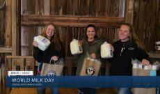 One dairy farm works to break record for World Milk Day