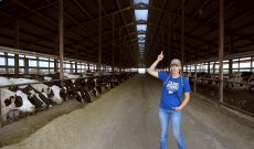 How dairy producers keep their cows cool this summer