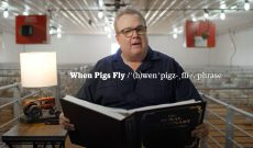 TV star has fun re-examining the phrase 'When pigs fly'