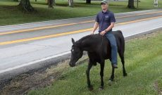 Trainer rides horse 2,500 miles to raise awareness for nonprofits